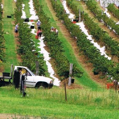 Wollombi Wines, Hunter Valley