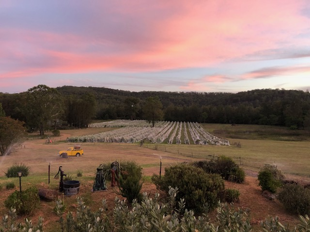 Ironbark Vineyard Cottage, Wollombi Wines, Hunter Valley Accommodation